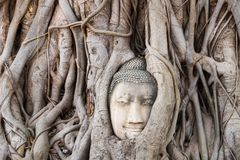 Ancient buddha head in Ayutthaya in Bangkok in Thailand royalty free stock photography