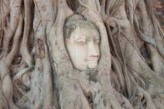Ancient buddha head Royalty Free Stock Photos