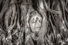 Ancient buddha head in Banyan tree root Royalty Free Stock Photo
