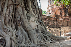 Ancient Buddha Head inside the tree Royalty Free Stock Images
