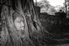 Ancient Buddha head in tree roots,A black and white. Photo at thailand Royalty Free Stock Photo