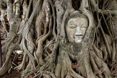 ancient Buddha image  tree Royalty Free Stock Photos
