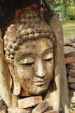 Ancient Buddhism head in root Stock Photography