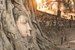 Ancient Buddhism head in root at, Ayutthaya, Thailand.  stock photography