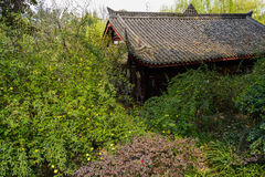 Ancient building in verdant spring,Chengdu Stock Image