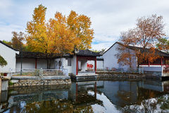 The ancient buildings and fall white poplar Stock Image