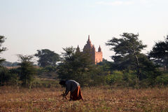 Ancient Burmese Pagoda. The many pagodas and stupas across the Bagan landscape were built between 849 and 1287 when there existed a relatively peaceful stock images