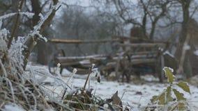 Ancient Cart Outdoor in Snow stock video