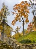 Ancient castle and autumnal park Stock Images