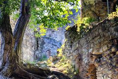 Ancient castle brick wall with tree stock images