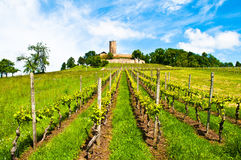 Ancient castle and vineyard Stock Photography