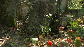 An ancient cemetery with inscriptions in the dead language. stock video