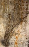 Ancient Chinese calligraphy Stock Image