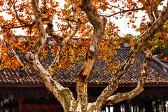 Ancient Chinese House Roof West Lake Hangzhou China Stock Photography