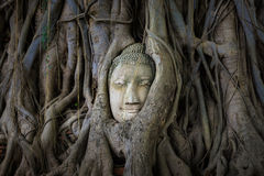 Antiquities in thailand. The ancient city of Ayutthaya Royalty Free Stock Photos