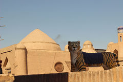 Ancient city of Khiva, Uzbekistan Stock Photography