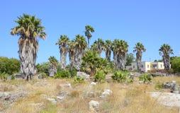 Ancient city ruins Kos, Greece Royalty Free Stock Photo