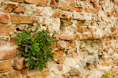 Ancient city wall of bricks Royalty Free Stock Photography