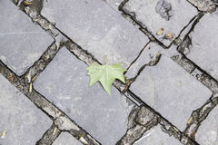 Ancient cobblestone floor Stock Photography