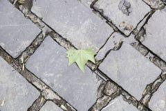 Ancient cobblestone floor Stock Photography