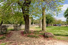 Ancient column, blooming tree. Olympia, Greece, Ancient column, blooming tree Royalty Free Stock Photography