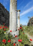 Ancient columns against present day hiking path. Greek columns lining alley Delos Stock Photos