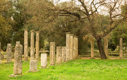 Ancient columns in Archea Olympia Stock Photo