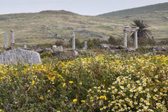 Ancient columns in the archeologic site of Delos Royalty Free Stock Image