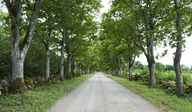 Ancient country road with the stone fence, surrounded with maple Royalty Free Stock Photos