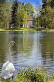 Ancient destroyed arbor in park and the swan in a grass ashore and looks at the lake. The ancient destroyed arbor in park and the swan in a grass ashore and Stock Photography