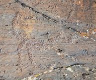 The ancient drawings on rocks Altai Stock Image