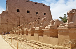 Ancient egypt statues of sphinx in Luxor karnak temple Royalty Free Stock Photos