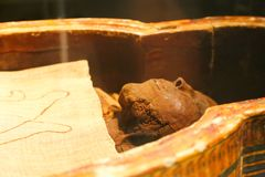 Ancient Egyptian Mummy royalty free stock images