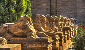 Ancient Egyptian sphinxes with head of Ram in Luxor, Egypt Royalty Free Stock Photo