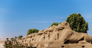 Ancient Egyptian sphinxes with head of Ram in Luxor, Egypt Royalty Free Stock Photography