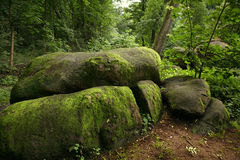 Ancient forest with big stones Stock Image