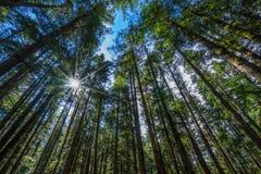 Ancient Forest in Jiuzhaigou Valley. On the mountain Stock Photos