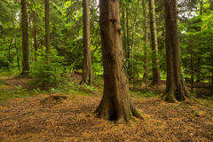 Ancient forestry of Abbots Leigh woods Royalty Free Stock Photo
