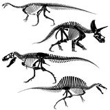 Ancient fossil dinosaur skeletons, lizard animals bones vector set Stock Photos