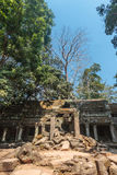 Ancient gallery of amazing Ta Prohm temple overgrown with trees. Mysterious ruins of Ta Prohm nestled among rainforest Stock Image