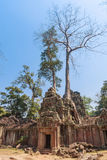 Ancient gallery of amazing Ta Prohm temple overgrown with trees. Mysterious ruins of Ta Prohm nestled among rainforest Stock Photo