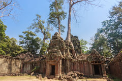 Ancient gallery of amazing Ta Prohm temple overgrown with trees. Mysterious ruins of Ta Prohm nestled among rainforest Royalty Free Stock Photos