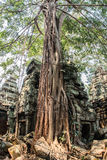 Ancient gallery of amazing Ta Prohm temple overgrown with trees. Mysterious ruins of Ta Prohm nestled among rainforest Stock Images