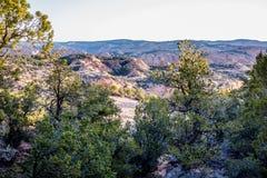 An ancient gnarled juniper near Navajo Monument park  utah. An ancient gnarled juniper tree near Navajo Monument park  utah Royalty Free Stock Photography