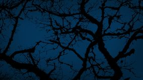 Ancient Gnarled Tree Branches On Stormy Night. Very old tree in the wind late at night stock video