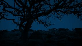 Ancient Gnarled Tree On Windy Night. Very old tree in barren landscape in the wind late at night stock video footage