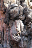 Ancient, gnawed tree trunk in the imperial garden in Forbidden City, Beijing Stock Photo