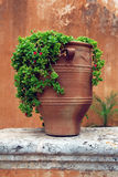Ancient greek terracotta flowerpot. Closeup of ancient greek terracotta flowerpot royalty free stock photo