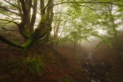Green forest in Gorbea Natural Park. Ancient green forest in Gorbea Natural Park Stock Photo