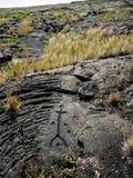 Ancient Hawaiian Petroglyphs at Volcanoes National Park Stock Image